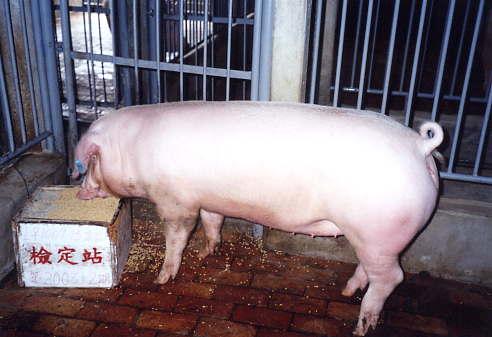 中央畜產會200312期L1009-15拍賣照片
