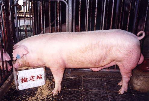 中央畜產會200312期L1680-04拍賣照片