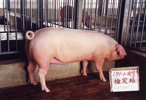 中央畜產會200401期L0091-02拍賣照片
