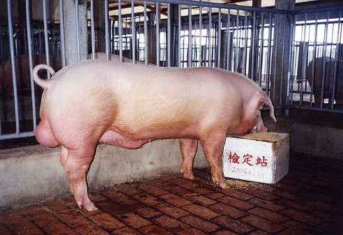 中央畜產會200401期L0091-13拍賣照片