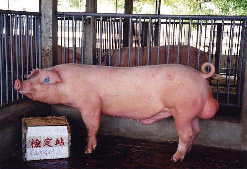 中央畜產會200401期L0839-11拍賣照片