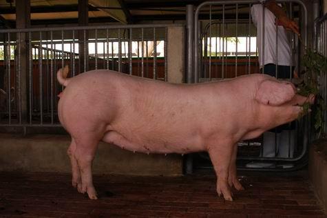 中央畜產會200401期L1201-14體型-全身相片