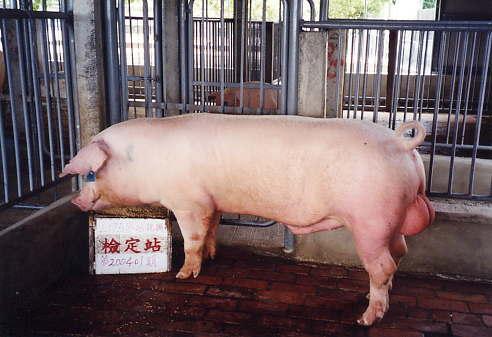 中央畜產會200401期L1758-06拍賣照片