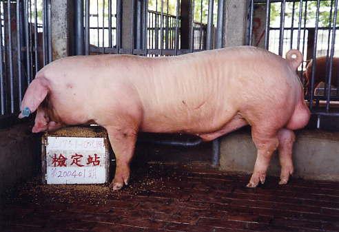 中央畜產會200401期L1759-10拍賣照片