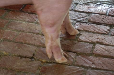 中央畜產會200403期L0687-10體型-四肢相片