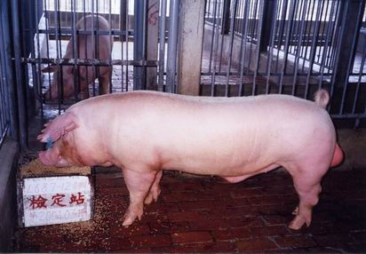 中央畜產會200403期L0687-12拍賣照片