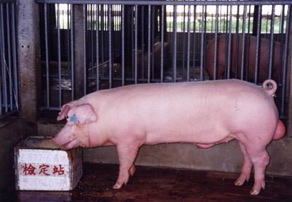 中央畜產會200403期L0877-06拍賣照片