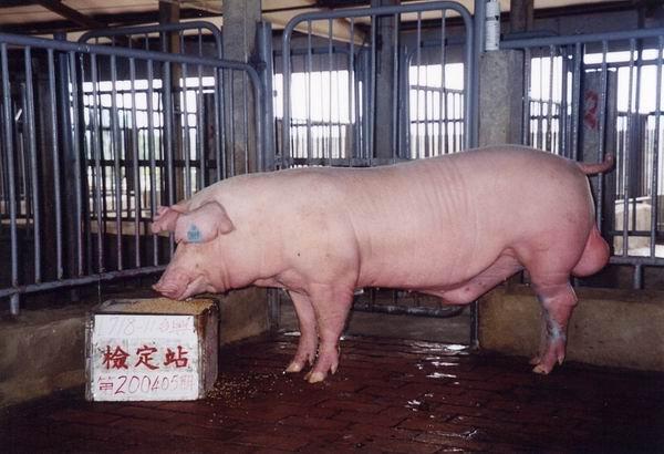 中央畜產會200405期L0718-11拍賣照片