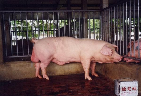 中央畜產會200405期L1810-02拍賣照片