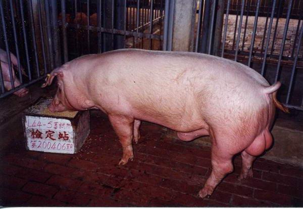 中央畜產會200406期L0044-05拍賣照片