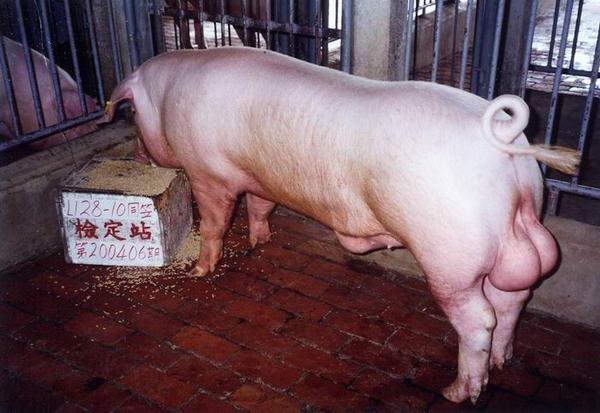 中央畜產會200406期L0128-10拍賣照片