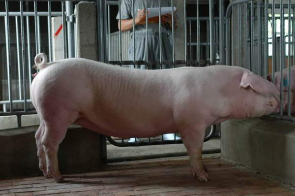 中央畜產會200406期L0281-01體型-全身相片