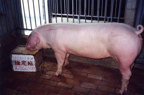 中央畜產會200406期L0281-01拍賣照片
