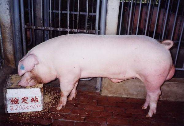 中央畜產會200406期L1311-02拍賣照片
