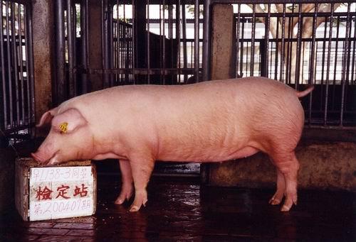 中央畜產會200407期L0138-03拍賣照片
