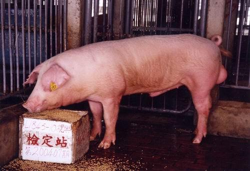 中央畜產會200407期L1845-10拍賣照片