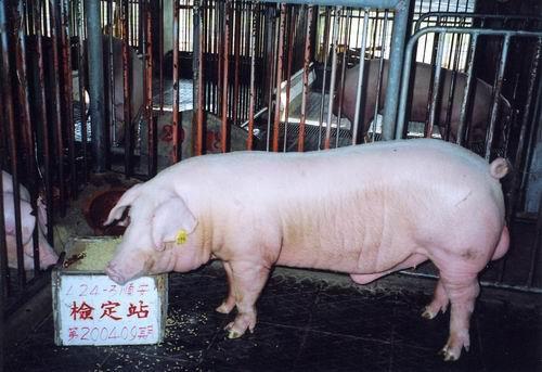 中央畜產會200409期L0024-03拍賣照片