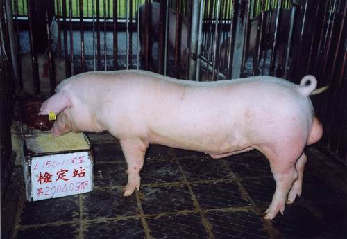 中央畜產會200409期L0150-11拍賣照片
