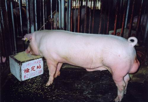 中央畜產會200409期L0150-13拍賣照片
