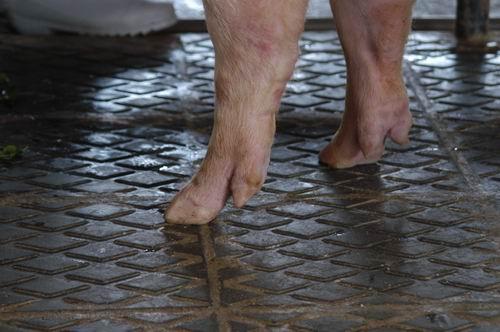 中央畜產會200409期L0332-03體型-四肢相片