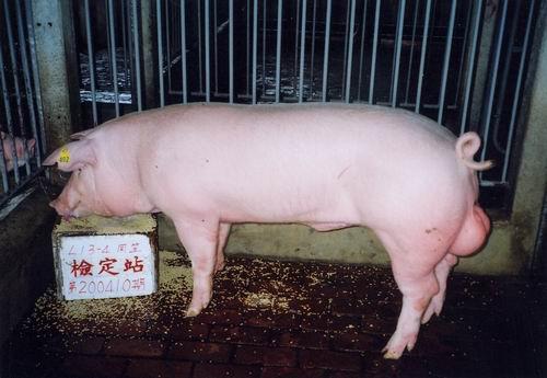 中央畜產會200410期L0013-04拍賣照片