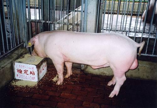 中央畜產會200410期L0505-01拍賣照片