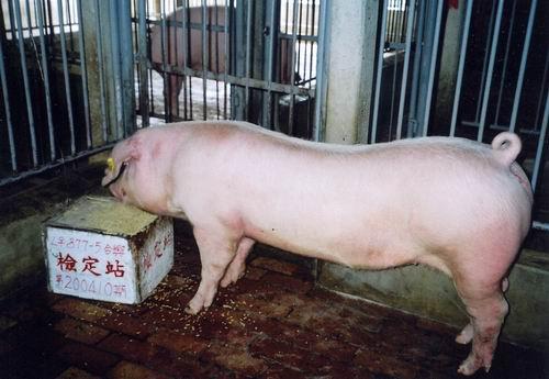中央畜產會200410期L0877-05拍賣照片