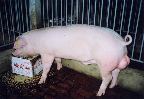 中央畜產會200410期L1010-14拍賣照片