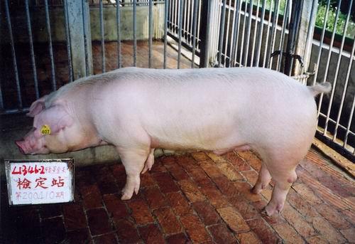 中央畜產會200410期L1345-02拍賣照片