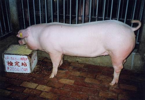中央畜產會200410期L1346-11拍賣照片