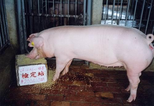 中央畜產會200410期L1486-11拍賣照片