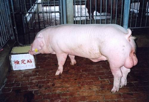 中央畜產會200411期L0020-01拍賣照片