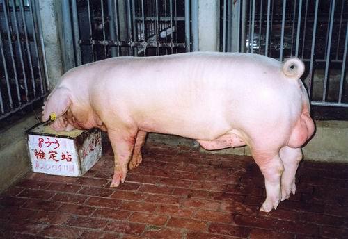 中央畜產會200411期L0083-03拍賣照片