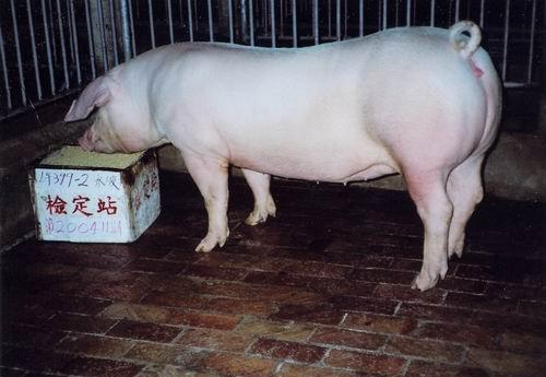 中央畜產會200411期L0399-02拍賣照片