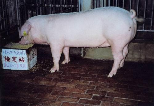 中央畜產會200411期L1016-05拍賣照片
