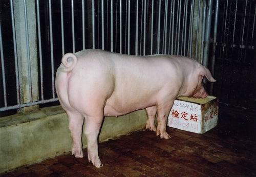 中央畜產會200411期L1051-14拍賣照片