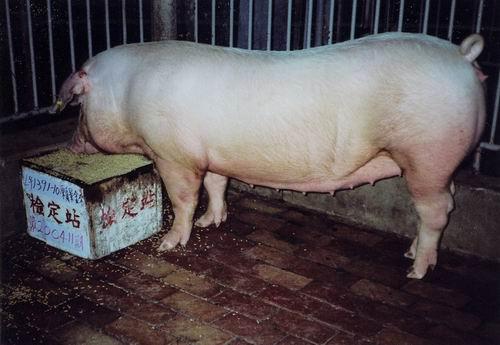 中央畜產會200411期L1391-10拍賣照片