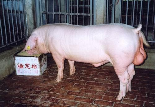 中央畜產會200411期L1926-10拍賣照片