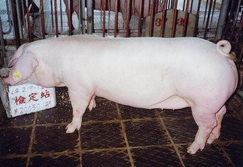中央畜產會200501期L0219-01拍賣照片