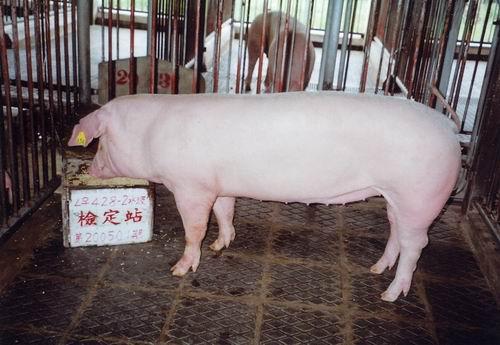 中央畜產會200501期L0428-02拍賣照片