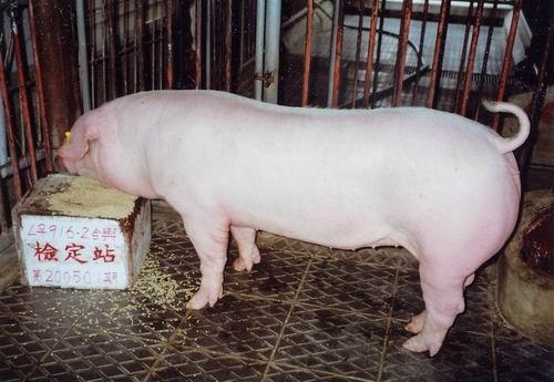 中央畜產會200501期L0916-02拍賣照片