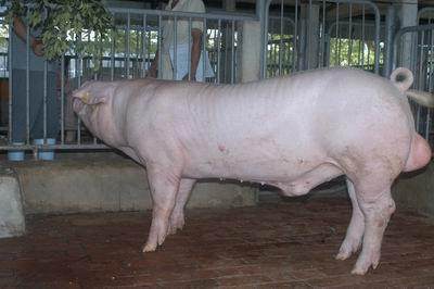 中央畜產會200501期L1058-10體型-全身相片