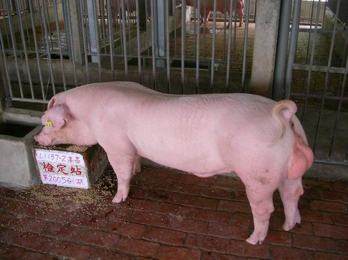 中央畜產會200501期L1157-02拍賣照片