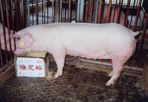中央畜產會200501期L1545-11拍賣照片