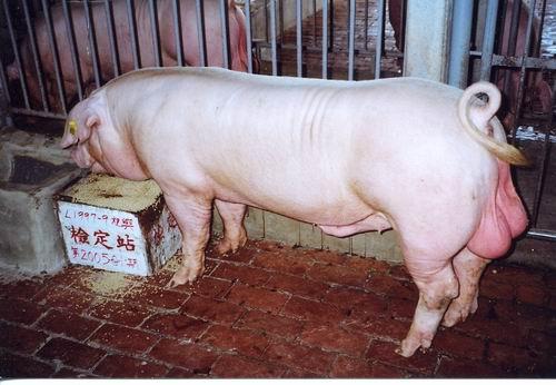 中央畜產會200501期L1997-09拍賣照片