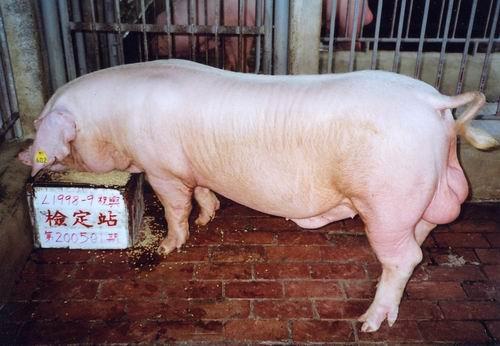 中央畜產會200501期L1998-09拍賣照片