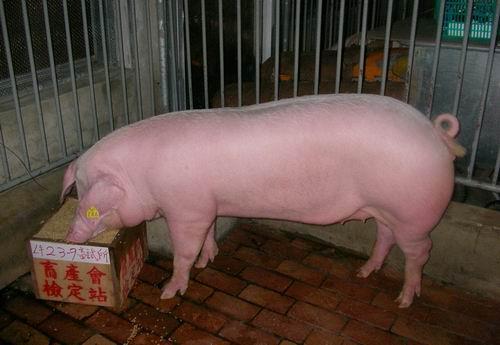 中央畜產會200503期L0023-09拍賣照片