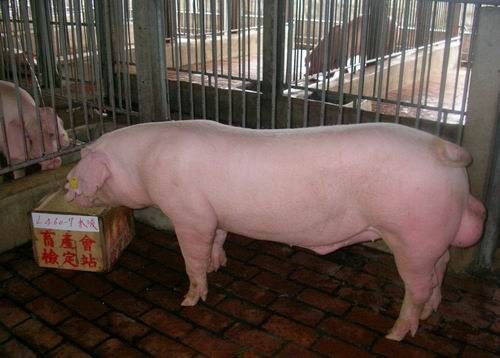 中央畜產會200503期L0460-07拍賣照片