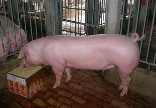 中央畜產會200503期L1586-12拍賣照片