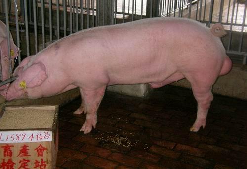 中央畜產會200503期L1589-04拍賣照片